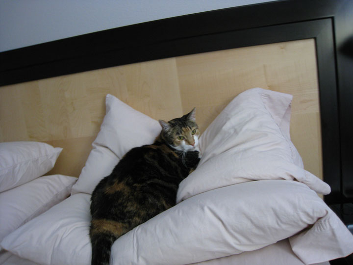 Jane and I share the pillows. She gets the bottom corner (sometimes)